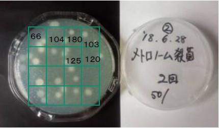 UVC照射に使用した納豆菌