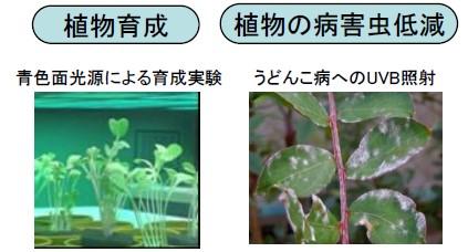 植物育成用紫外線光源